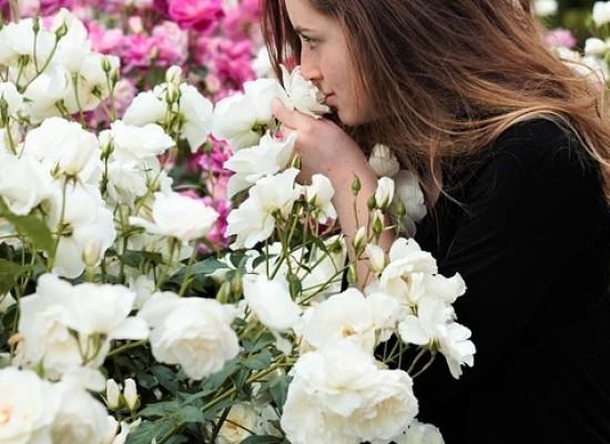 Kesäinen tuoksu piristää ja saa hormonit hyrräämään